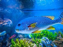 Finding Nemo: How to be a marine biologist in 5 easy(ish) steps