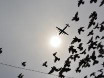 Is it a bird? Is it a plane? No, it's an aviation accelerator in Shannon