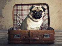 An Irish TripAdvisor-like tool for pets is in line for Las Vegas glory