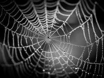 Dark web dragnet delivers destruction to AlphaBay and Hansa