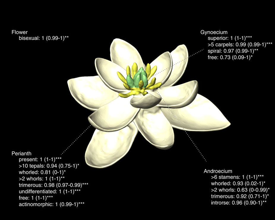 Ancient flower