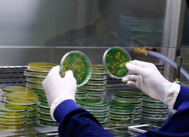 Bacteria dishes