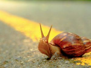 Snail on a road