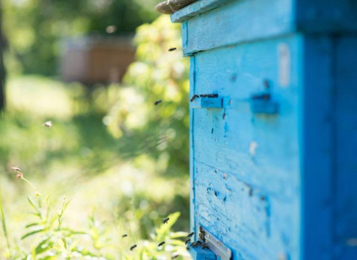 Beehive IoT