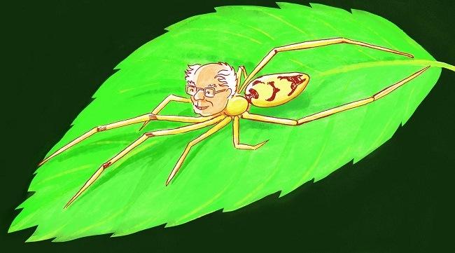 Bernie Sanders drawing