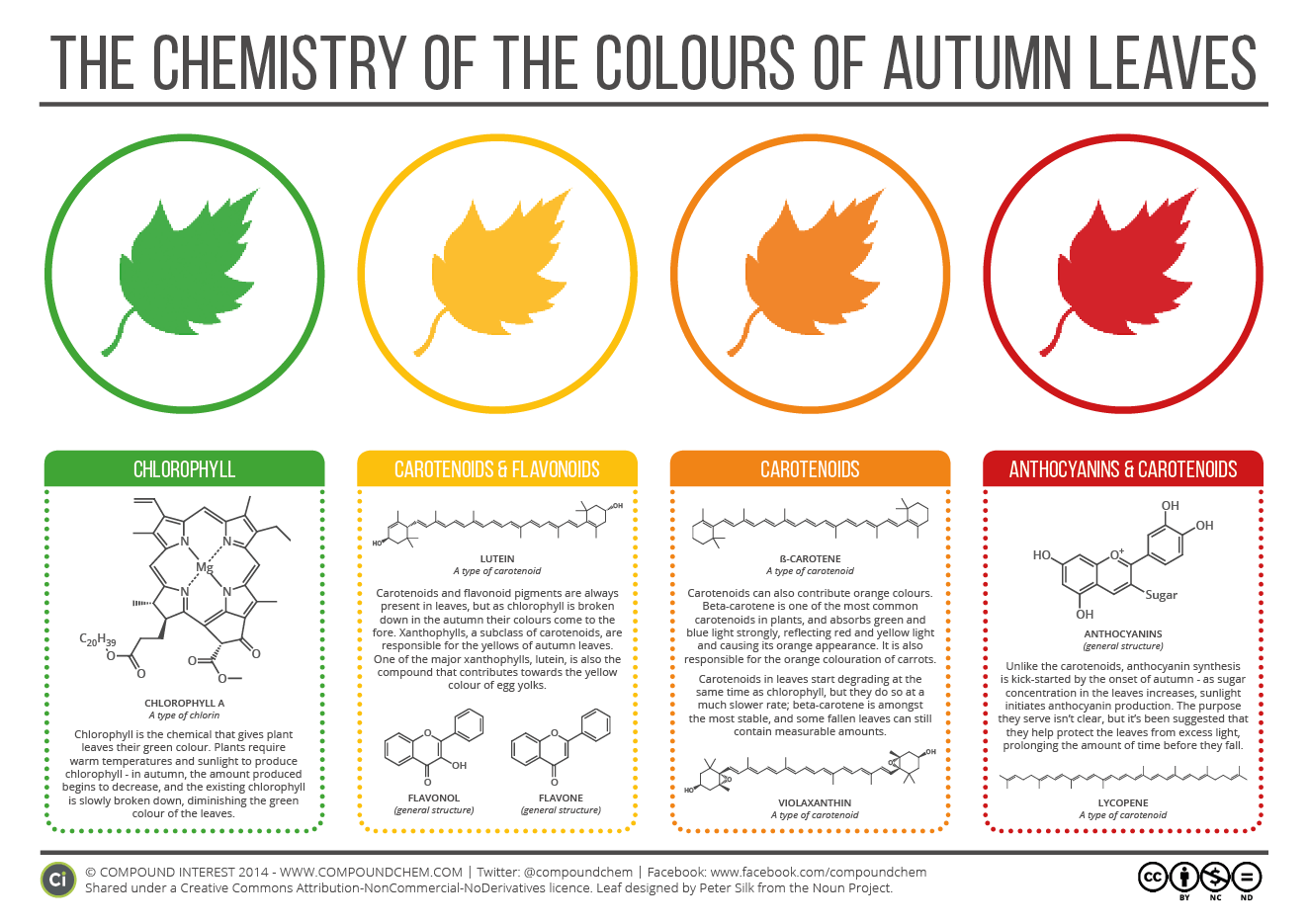 autumn-leaves-infographic