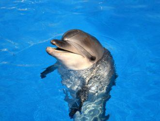 Voice assistants fooled by 'dolphin' ultrasound messages, according to new research