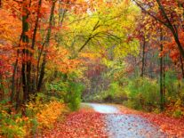 Why do the leaves change colour in autumn?