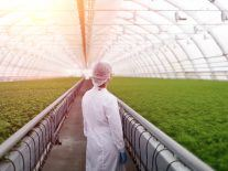 Plant the seeds now to scale up Ireland's biotech ambition