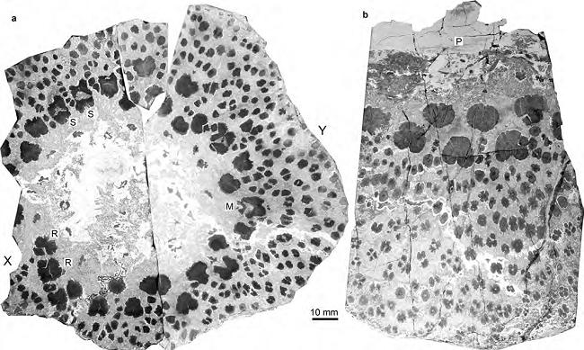 Tree fossils