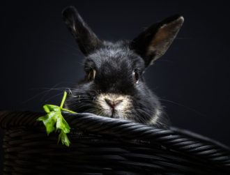 Bad Rabbit: What we know about the latest virus besieging Europe