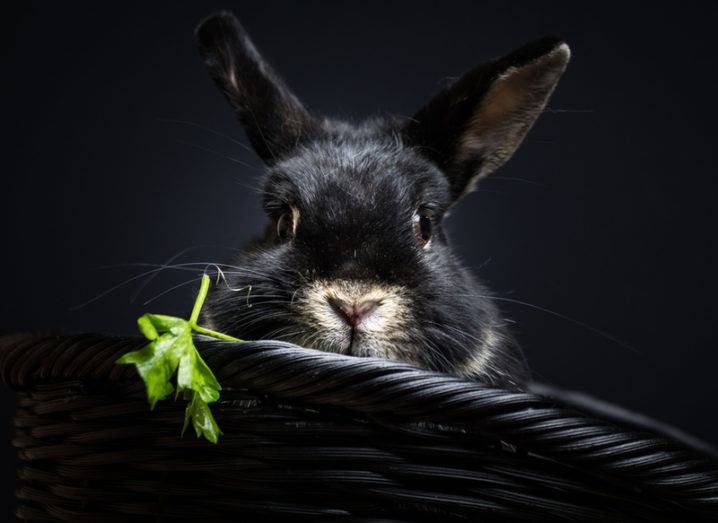 Beware of Bad Rabbit: What we know about latest virus besieging Europe