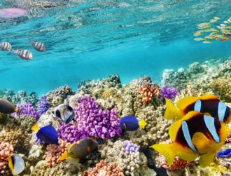 Efforts to save dying coral reefs bolstered by stunning 3D map
