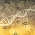 CRISPR 2.0? New modification overcomes collateral damage during editing