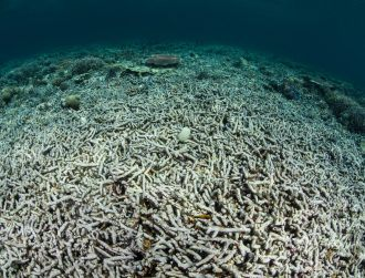 Speed of coral reef bleaching may make full recovery impossible