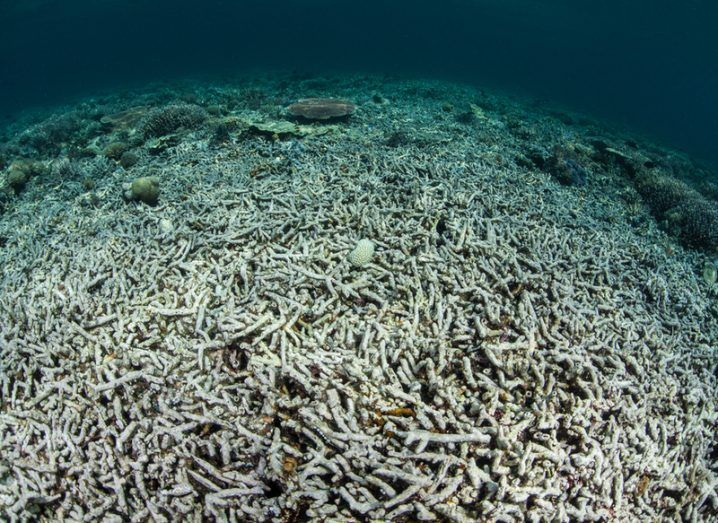 Worlds reefs under siege from global warming
