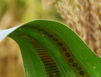 Graphene wearable for plants? Meet agritech's next revolution