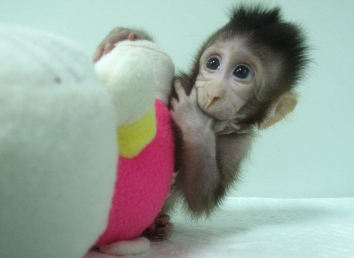 Meet Zhong Zhong and Hua Hua, cloned monkeys inspired by Dolly