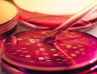 Hello World: Researchers store message in E.Coli for future generations