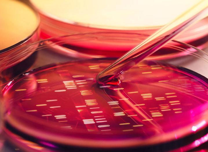 Hello World: Researchers store message in E.Coli for distant ancestors