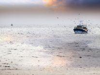 73pc of deep sea fish in north-west Atlantic ingest microplastics