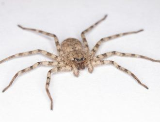 Creepy-crawly has a spin that puts Winter Olympic athletes to shame