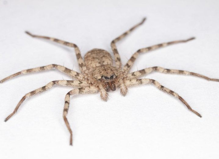 Creepy crawly has a spin that puts Winter Olympic athletes to shame