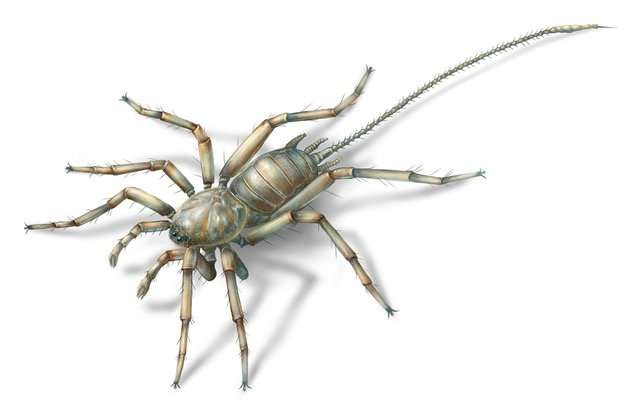 How the spider would have looked. Image University of Kansas