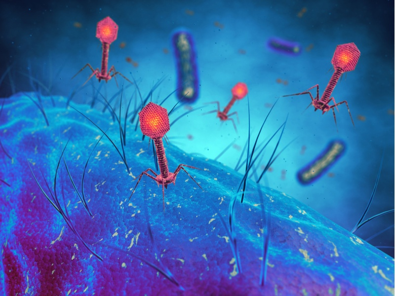 How can we harness the power of bacteria-killing viruses?