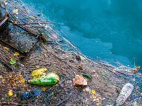 Study reveals depressing extent of the Great Pacific Garbage Patch