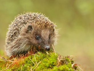 Dublin tech firm Glantus acquires New York company Hedgehog Analytics