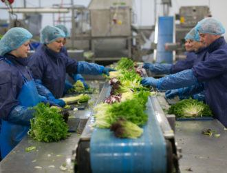 Automate or die: How a vegetable company embraced technology to survive