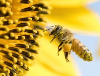 Bees even more under threat from climate change than we thought