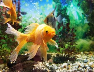 The curious case of how a casino's database was hacked by a fish tank