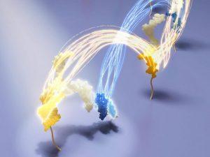 Cartwheeling DNA
