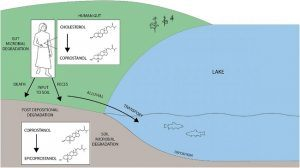 Schematic of how faecal matter deposits in a lake