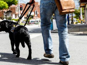 man walking with his guide dog