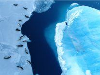 Experts predict two possible futures for Antarctica after massive ice loss