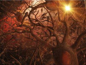 Firing neurons in the brain