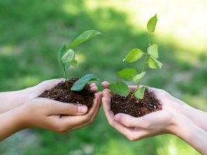 two people holding seedlings