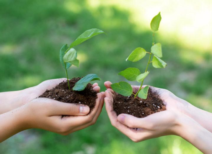 two people holding seedlings