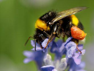 PoshBee: New €9m project aims to boost global bee health