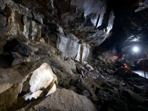 Bear bone in Aillwee Cave