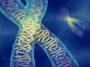 Illustration of a chromosome