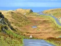 Ireland fails to make progress in global broadband rankings