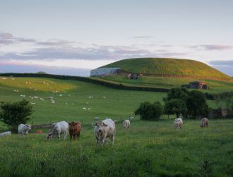 Ghostly shadows of hidden structures near Newgrange revealed by heatwave