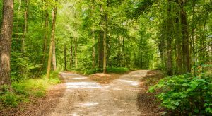 Two diverging paths in the woods, career choice concept