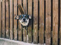 We need a social media watchdog with teeth