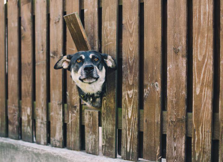 dog sticking head through fence