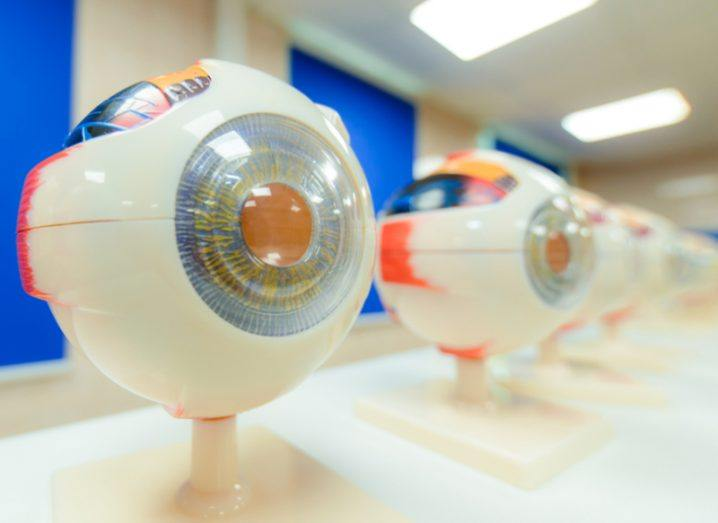 Row of medical models of eyes moving into the distance from left to right.